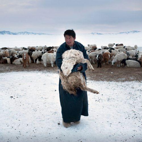 Environmental migrants: the last illusion. Ulaan Baator, Mongoli